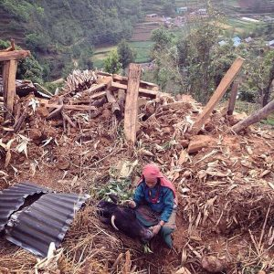 72-year-old Sundaya Tamang whispers to her cow Lakshmi as she lies buried in her cowshed unable to be rescued. Sundaya and her family have lost three houses to this earthquake.