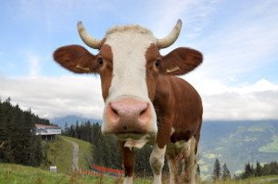 chris_mccullough_hay_milk_austria_dsc_0553-300x199